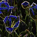 Majestic Blue by Steven Parker