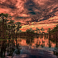 Majestic Cypress Paradise Sunset by Bill And Deb Hayes