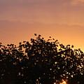 Majestic Dawn by Joseph Baril