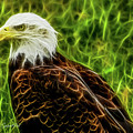 Majestic Eagle by Joann Copeland-Paul
