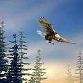 Majestic Eagle by Paul Sachtleben