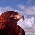 Majestic Golden Eagle by Marie Hicks