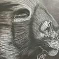 Majestic Lion by Brandy Vasquez