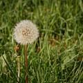 Make A Wish by Amanda Gustafson