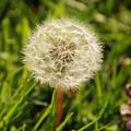 Make A Wish by Ashley O