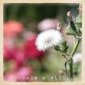Make A Wish... by Cindy Garber Iverson