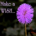 Make A Wish by Lisa Renee Ludlum
