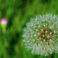 Make A Wish by Tikvah's Hope
