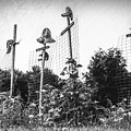 Makeshift Scarecrows by Tom Mc Nemar