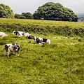 Making Milk by Chris Horsnell
