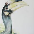 Malabar Pied Hornbill -juvenile Bird by Sasitha Weerasinghe