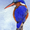 Malachite Kingfisher by Lynn Quinn