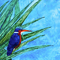 Malachite Kingfisher by Patricia Beebe