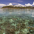 Malaysia, Mabul Island by Dave Fleetham - Printscapes