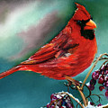 Male Cardinal And Snowy Cherries by Terry R MacDonald