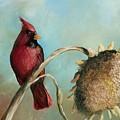 Male Cardinal by Jane Harris