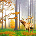 Male Elk Bugling by Laura D Young