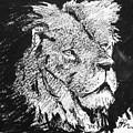 Male Lion Portrait by Paul Miller
