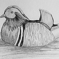Male Mandrain Duck  by Amy Gallagher