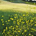 Malibu Creek Wildflowers by Kyle Hanson