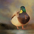 Mallard by Steven Richardson