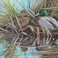 Mallards At Rithet's Bog by E Colin Williams ARCA