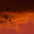 Mallards At Sunset by Eric Noa