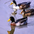 Mallards by Kenna Westerman