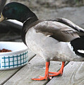 Mallards Like Cat Food by Laura Martin