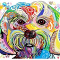 Maltese Puppy by Eloise Schneider