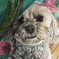 Malti-poo Peek-a-boo by Debbie Fischer