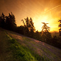 Malvern Hill by Angel Ciesniarska