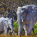 Mama And Baby Elephant by Rob Daugherty