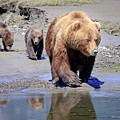 Mama Bear Leads The Way by Jack Bell