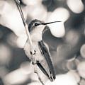 Mama Hummingbird by Kelly Maize
