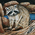 Mama Racoon by Ruth Bares