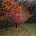 Mama's Dogwoods by Susan Jenkins