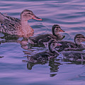 Mama's Love  by Leslie Reagan - Joy To The Wild Photos