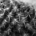 Mammillaria by Nathan Abbott