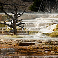 Mammoth Hot Springs Beauty by Chad Davis