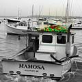 Mamosa by Doug Mills