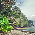 Mamutik Island by Lloyd Southam Sebire