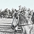 Man And His Horse by Samantha Burrow