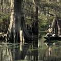 Man Fishing In Cypress Swamp by Herman Robert