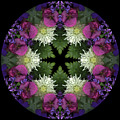Mandala 3 by Marsha Tudor