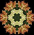 Mandala Autumn Star by Nancy Griswold