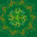 Mandala Journey by Mary Raven