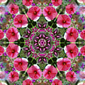 Mandala Pink Patron by Nancy Griswold