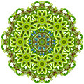 Mandala - Revival-2201-01gb by Variance Collections