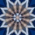 Mandala Sea Star by Nancy Griswold